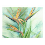 Tropical Flower Bird Of Paradise Painting - Multi Postcard