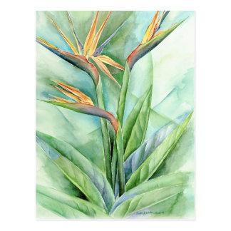 Tropical Flower Bird Of Paradise Painting - Multi Postcard