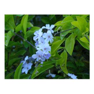 Tropical Flower Fiesta - Flores Azules Postcard