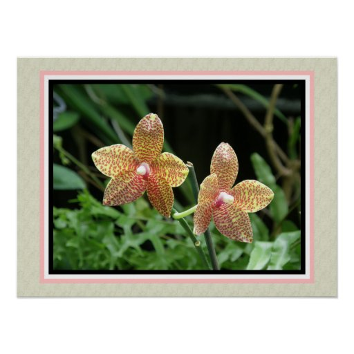 Tropical Flower Orquideas Posters