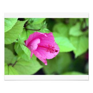 Tropical Flower Art Photo
