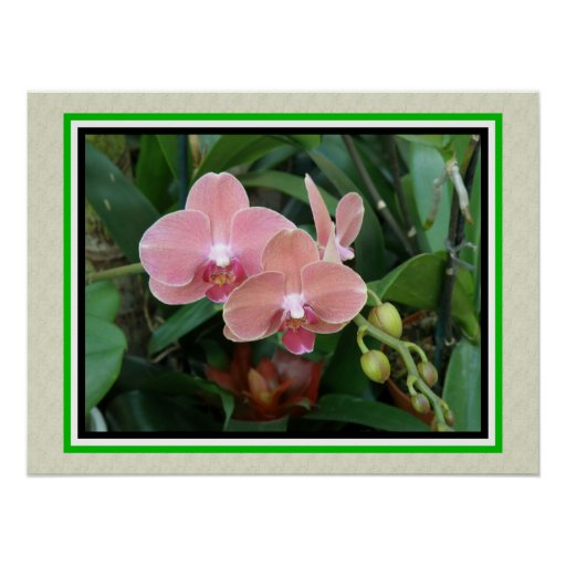 Tropical Flower Pink Orchid - Posters