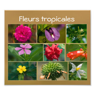Tropical flowers of Marie-Gallant Art Photo