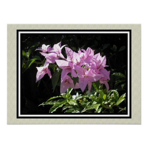 tropical flowers trinitaria print
