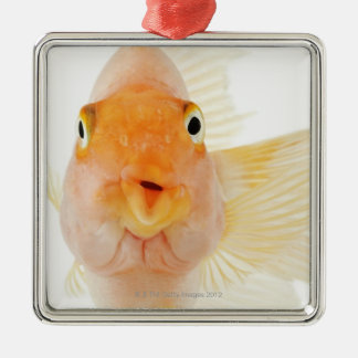 Tropical freshwater fish christmas ornament