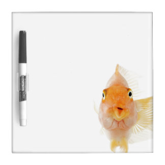 Tropical freshwater fish Dry-Erase whiteboards