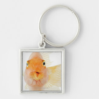 Tropical freshwater fish key ring