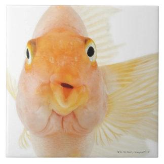 Tropical freshwater fish large square tile