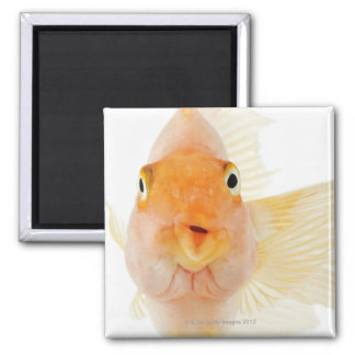 Tropical freshwater fish magnet