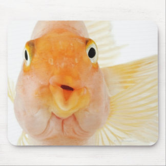 Tropical freshwater fish mouse mat