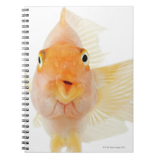 Tropical freshwater fish spiral notebook