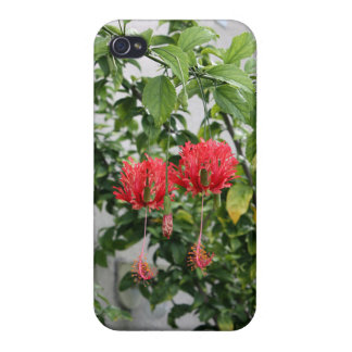 Tropical Fringed Coral Hibiscus Flower Case For iPhone 4