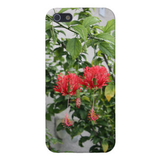 Tropical Fringed Coral Hibiscus Flower iPhone 5/5S Cover