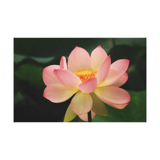 Tropical Garden Lotus Floral Pink Green Relaxation Canvas