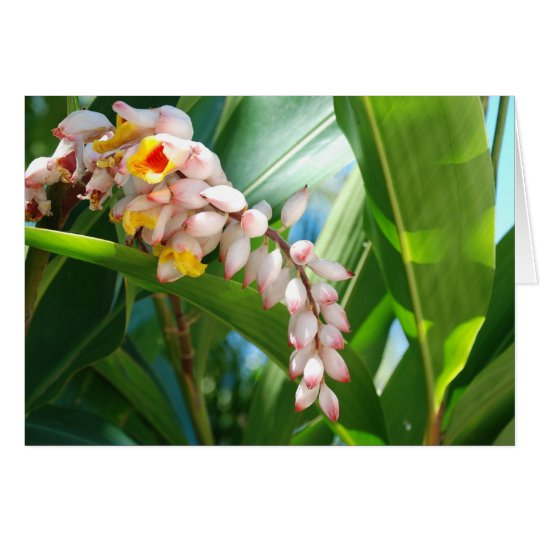 Tropical Ginger Card