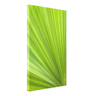 Tropical Green Palm Frond Canvas Print
