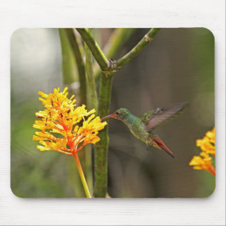 Tropical Hummingbird and Flower Mousepad