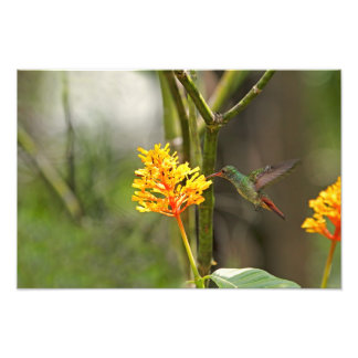 Tropical Hummingbird and Flower Photo