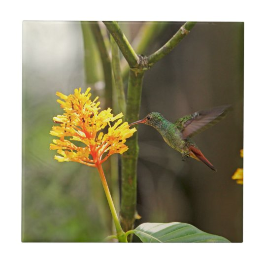 Tropical Hummingbird and Flower Small Square Tile