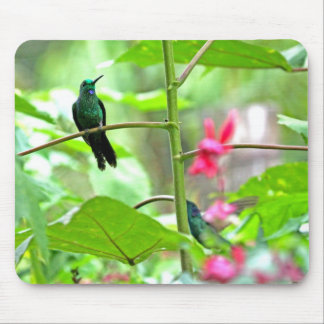 Tropical Hummingbird and Flowers Mousepads