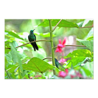 Tropical Hummingbird and Flowers Photo Print