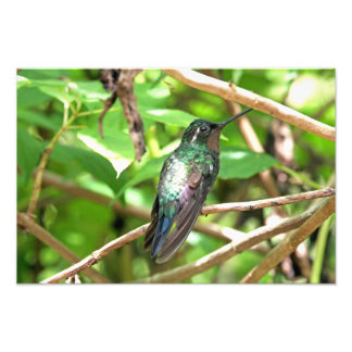 Tropical Hummingbird Picture Art Photo