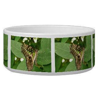 Tropical Iridescent Green Butterfly Dog Bowl