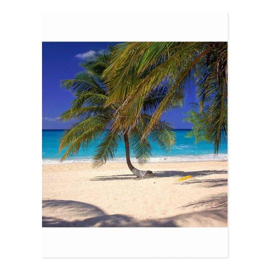 Tropical Island Seven Mile Grand Cayman Postcard