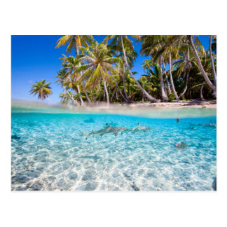 Tropical island under and above water postcard