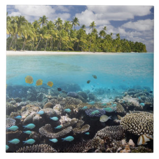 Tropical Lagoon in South Ari Atoll in the Large Square Tile