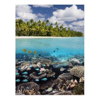 Tropical Lagoon in South Ari Atoll Postcard