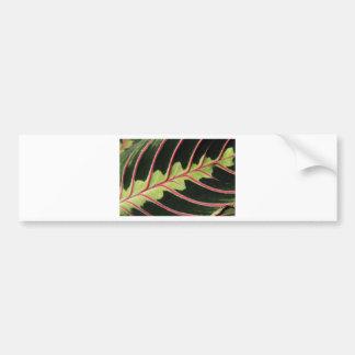 Tropical leaf bumper stickers