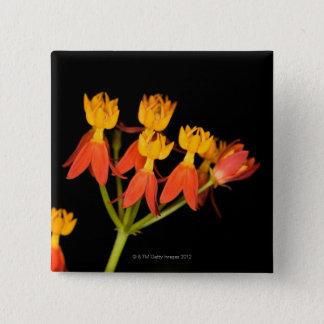 Tropical Milkweed  (Asclepias curassavica) - 15 Cm Square Badge
