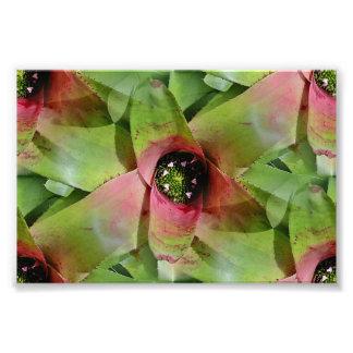 Tropical Neoregelia Bromeliad 'Tossed Salad' Photo Art