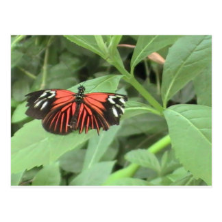 Tropical orange butterfly post card