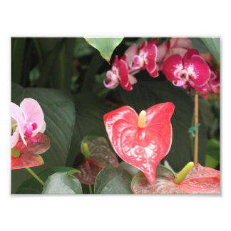 Tropical Orchid flowers Photo Print