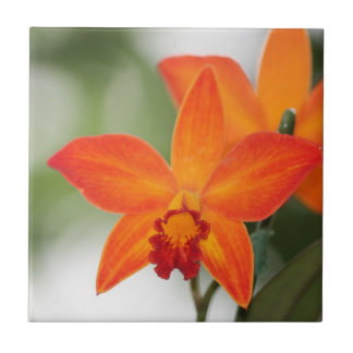 Tropical Orchid Tile