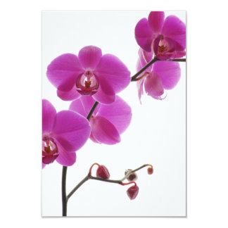 Tropical Orchid Wedding Invitation Response Card
