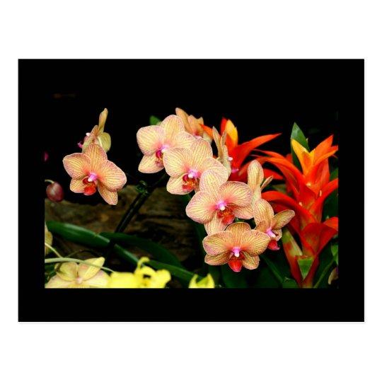 Tropical Orchids Postcard