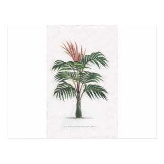 tropical palm tree collection - drawing V Postcard