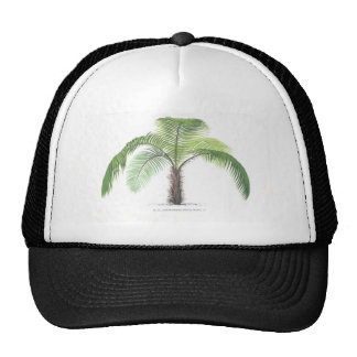 tropical palm tree collection - drawing VI Hat