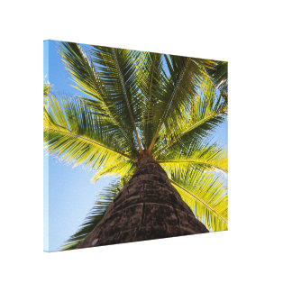 Tropical Palm Tree In The Sun Canvas Print