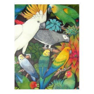 Tropical Parrots & Bromeliads Postcard