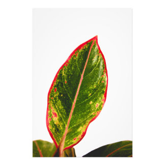 Tropical Plant Red Aglaonema Wall Art Photo Print