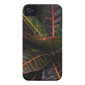 Tropical Plants iPhone 4 Case
