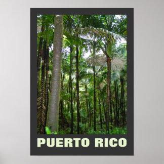 Tropical Plants El Yunque Rainforest Poster