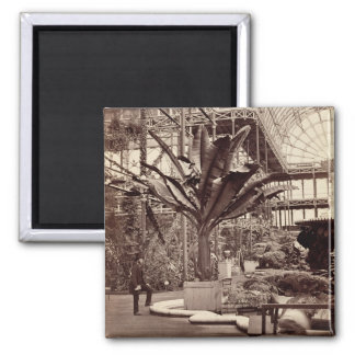 Tropical Plants in the Egyptian Room, Crystal Pala Magnet