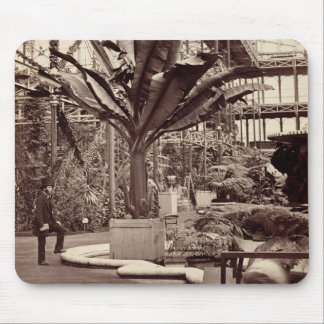 Tropical Plants in the Egyptian Room, Crystal Pala Mouse Pad