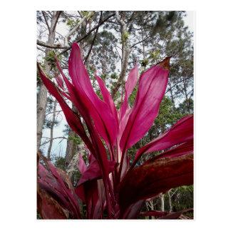 Tropical Plants Postcard Series - Florida
