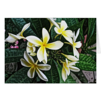 Tropical Plumeria Card